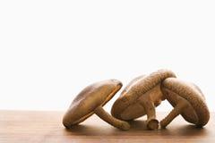 Trois champignons de couche bruns. Photo libre de droits