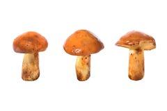 Trois champignons de couche comestibles Photo libre de droits