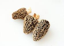 Trois champignons de couche de morelle photo libre de droits