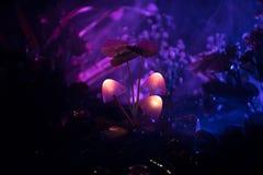 Trois champignons rougeoyants d'imagination en plan rapproché foncé de forêt de mystère Le beau macro tir du champignon magique o photo libre de droits