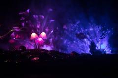 Trois champignons rougeoyants d'imagination en plan rapproché foncé de forêt de mystère Le beau macro tir du champignon magique o images libres de droits