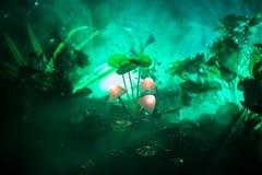 Trois champignons rougeoyants d'imagination en plan rapproché foncé de forêt de mystère Le beau macro tir du champignon magique o photos libres de droits