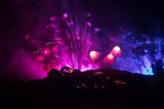 Trois champignons rougeoyants d'imagination en plan rapproché foncé de forêt de mystère Le beau macro tir du champignon magique o photographie stock libre de droits