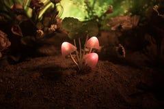 Trois champignons rougeoyants d'imagination en plan rapproché foncé de forêt de mystère Le beau macro tir du champignon magique o photographie stock