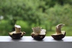 Trois champignons sur un fond vert Images libres de droits