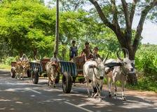 Trois chariots de boeufs sur la route Image libre de droits