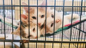 Trois chatons photo stock