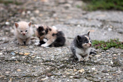 Trois chatons abandonnés Images libres de droits