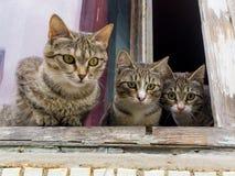 Trois chatons curieux se reposent sur la fenêtre et regardent la rue Images libres de droits