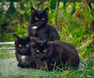 Trois chatons d'animal familier Photo libre de droits