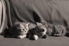 Trois chatons mignons Photos libres de droits