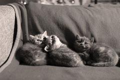 Trois chatons mignons Images libres de droits