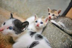 Trois chatons mignons photo libre de droits