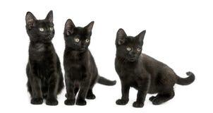 Trois chatons noirs regardant loin, 2 mois, d'isolement Image stock