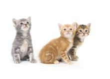 Trois chatons sur un fond blanc Photo stock