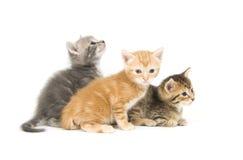 Trois chatons sur un fond blanc Image stock