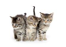 Trois chatons tigrés image libre de droits