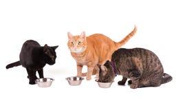 Trois chats à leurs bols de nourriture Photographie stock libre de droits