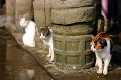 Trois chats Photos stock