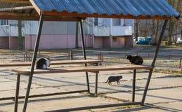 Trois chats jouent près du belvédère Images libres de droits