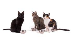 Trois chats se reposant à côté de leurs bols de nourriture Photographie stock libre de droits