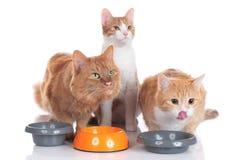 Trois chats se reposant à leurs bols de nourriture Image libre de droits