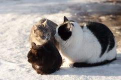 Trois chats se repose sur une neige Photo stock