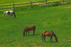 Trois chevaux photo stock