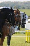 Trois chevaux image stock