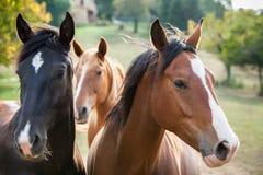 Trois chevaux Photographie stock libre de droits