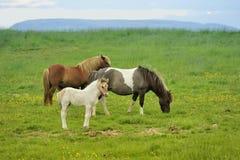 Trois chevaux au pré Image libre de droits