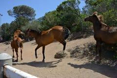 Trois chevaux bruns à l'intérieur d'un pré Photographie stock