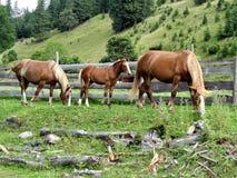 Trois chevaux dans la barrière en bois sur le fond de flanc de coteau Photo stock