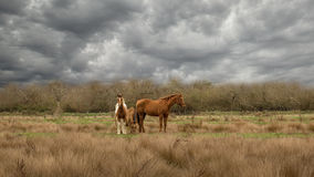 Trois chevaux sous Grey Clouds Photographie stock libre de droits