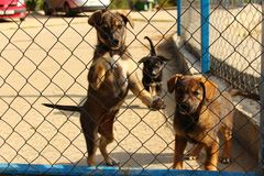 trois chiens derrière les barres Photographie stock libre de droits