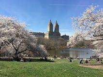Trois chiens pour deux personnes un sakuura d'avril de chiens de la personne trois dans l'arbre de Central Park de New York image stock