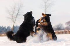 Trois chiens sautant dans la neige Image libre de droits