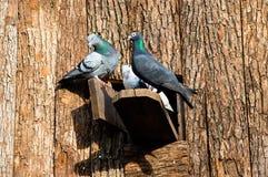 Trois colombes Images libres de droits