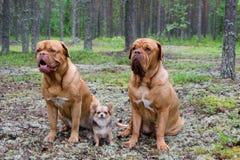 Trois crabots dans la forêt Photos libres de droits