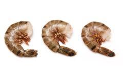 Trois crevettes roses de tigre Photos stock