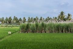 Trois cultures en une photo, Inde de Senapathihalli Photos stock