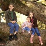 Trois enfants de mêmes parents dans un arbre Photos libres de droits