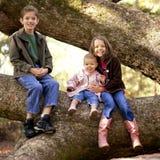 Trois enfants de mêmes parents dans un arbre Images libres de droits