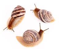 Trois escargots Images libres de droits