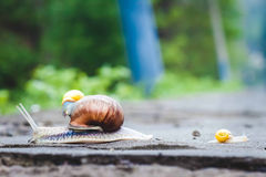 Trois escargots de parc Photo libre de droits