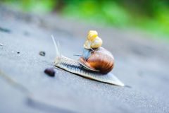 Trois escargots de parc Photos stock
