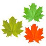 Trois feuilles d'érable Photos libres de droits