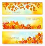 Trois feuilles d'Autumn Nature Banners With Colorful illustration de vecteur