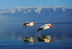 Trois fishermans volants images libres de droits