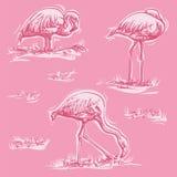 Trois flamants sur le fond rose Photographie stock